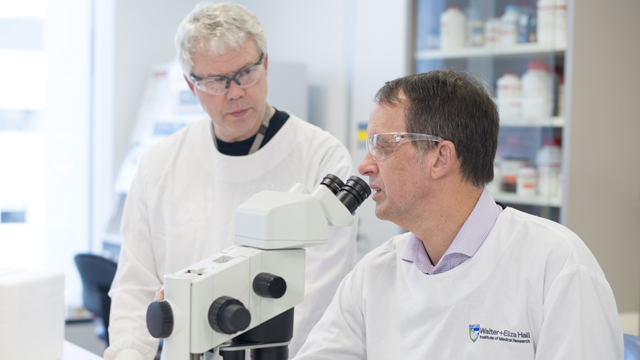 Dr John Menting and Associate Professor Mike Lawrence investigate how insulin and the related insulin-like growth factors signal into cells.